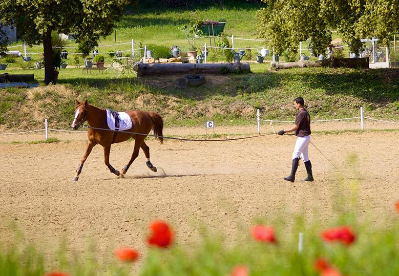 ecole-francaise-equitation-mornas2
