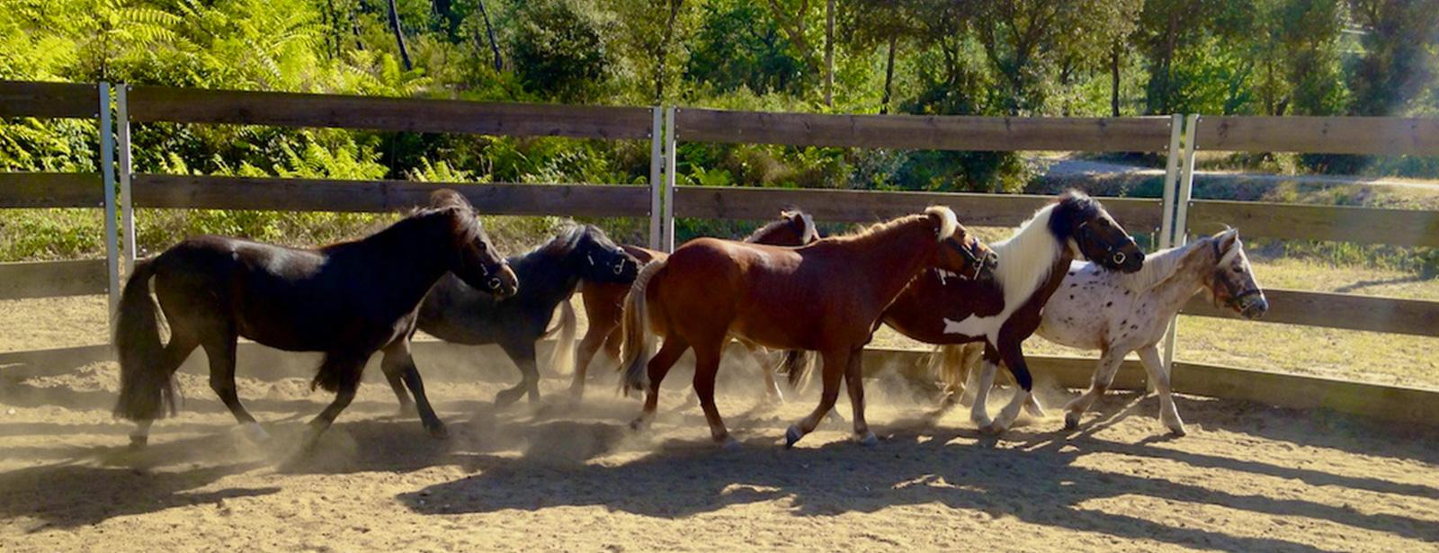 haras-merindol-chevaux2