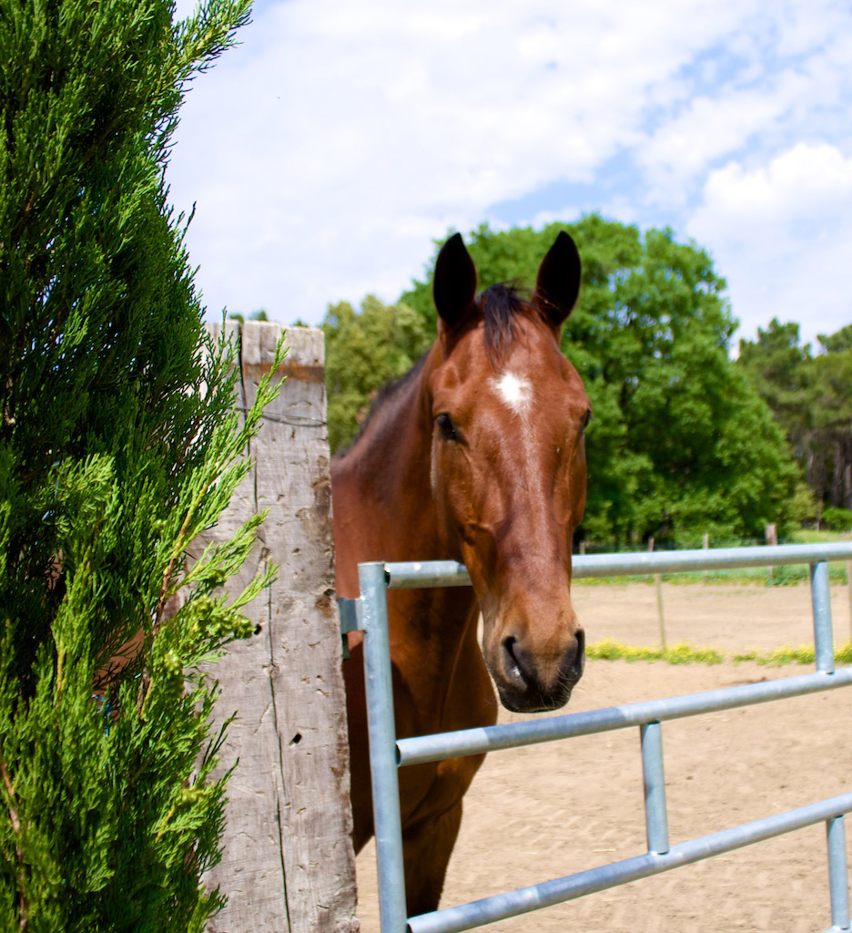 pension-chevaux-mornas